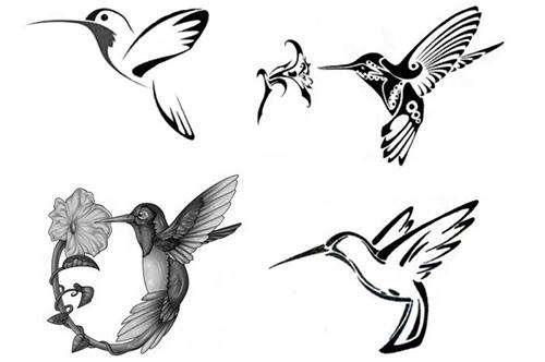 колибри эскиз